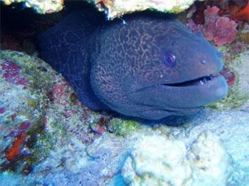 В Генуэзском аквариуме завелись мурены